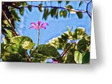 Green Window Greeting Card