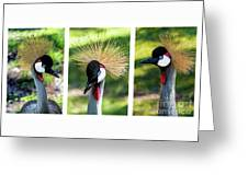 Grey Crowned Crane Gulf Shores Al Collage 2 Triptych Greeting Card