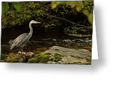 Grey Heron Fishing Greeting Card