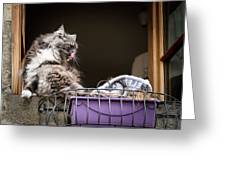 Grey Long Haired Cat Sitting On A Window Sill Greeting Card