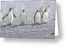 Group Of King Penguins In The Snow Greeting Card by Alan M Hunt