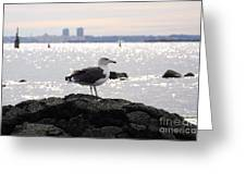Gull Isle II Greeting Card