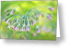 Sicilian Honey Lily Greeting Card