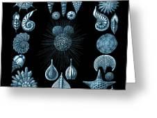 Haeckel Thalamphora Greeting Card