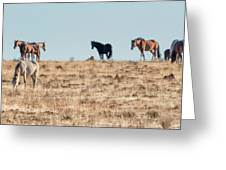 Hanging With Family And Friends - South Steens Wild Horses Greeting Card by Belinda Greb