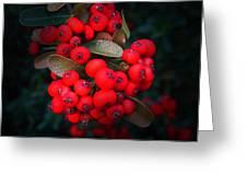 Happy Berries Greeting Card