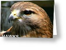 Hawks Mascot 2 Greeting Card