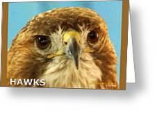 Hawks Mascot 4 Greeting Card