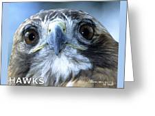 Hawks Mascot Greeting Card