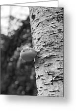 Heart On A Tree Greeting Card