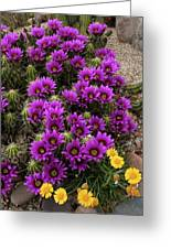Hedgehog Cactus And Yellow Daisies Greeting Card