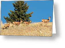 Herd Of Colorado Deer Greeting Card