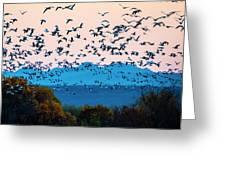 Herd Of Snow Geese In Flight, Soccoro Greeting Card