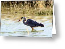 Heron Capturing A Fish Greeting Card