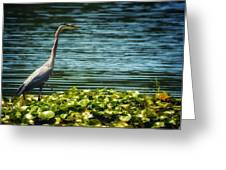 Heron In The Lily Pads Greeting Card