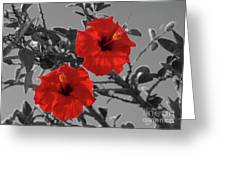 Hibiscus Selective Color Greeting Card