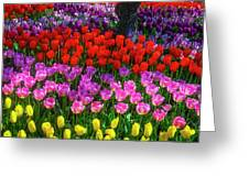 Hidden Garden Of Beautiful Tulips Greeting Card