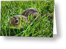 Hiding In The Grass Greeting Card