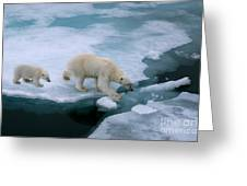 High Angle Of Mother Polar Bear And Cub Greeting Card
