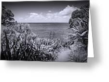 Hiking On Tiritiri Matangi New Zealand Bw Greeting Card