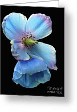 Himalayan Blue Poppy Greeting Card