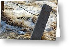 Hoar Frost On A Fence Along Turnagain Arm On The Seward Highway Alaska Greeting Card