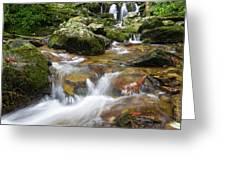Hogcamp Branch Falls I Greeting Card by William Dickman