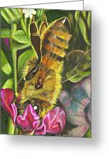 Honey Bee On Mexican Heather Greeting Card