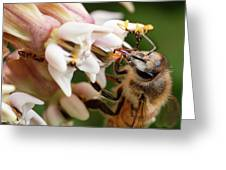 Honeybee Nectar Search Greeting Card by Brian Hale