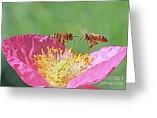 Honeybees Greeting Card
