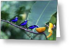 Honeycreeper Buffet Line Greeting Card