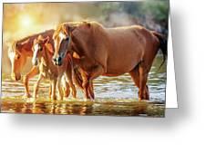 Horse Family Walking In Lake At Sunrise Greeting Card