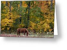 Horse In Fall Greeting Card