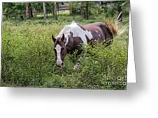 Horse Print 578 Greeting Card