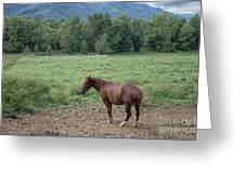 Horse Print 900 Greeting Card