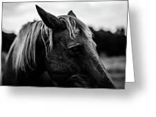 Horse Up-close Greeting Card