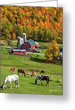 Horses Grazing In Autumn Greeting Card