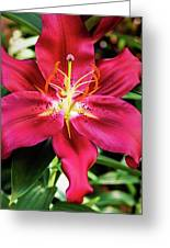 Hot Pink Day Lily Greeting Card