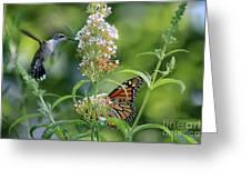 Hummingbird And Monarch Greeting Card