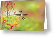 Hummingbird And Pride Of Barbados  Greeting Card