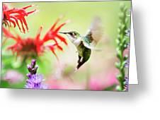 Hummingbird Fancy Greeting Card