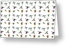 Hummingbirds Of Trinidad And Tobago On White Greeting Card
