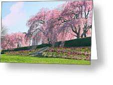 Weeping Spring Cherry  Greeting Card
