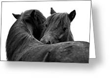 I Just Need A Hug. The Black Pony Bw Transparent Greeting Card