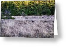 I Spy 4 Deer Greeting Card