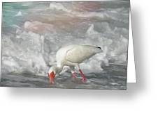 Ibis And A Tinted Sea Greeting Card