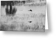 Ibsis Flying In At Evening To Roosting Ground Greeting Card by Dan Friend