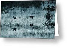 Ibsis Flying In At Sunset To Roosting Ground Greeting Card by Dan Friend