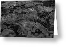 Ice Layer Broken Over Little Plants Greeting Card