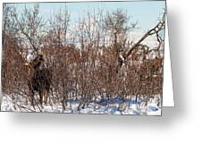 In Ninilchik A Moose Grazes In The Village In Late Winter Greeting Card